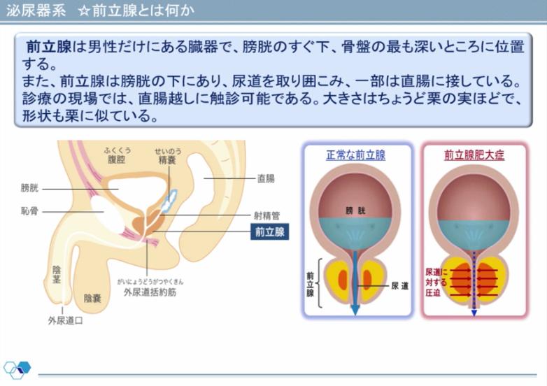 泌尿器疾患の薬物療法、再確認