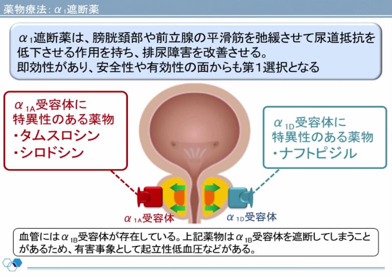 泌尿器系の基礎知識の画像